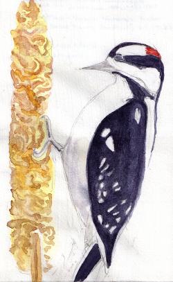 dewdrop_woodpeckervs